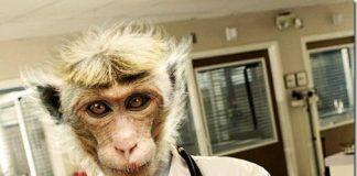 Γιατρός «μαϊμού»: Διάλογος σοκ με ασθενή – «Καρκίνος bye-bye» (Ηχητικό ντοκουμέντο)